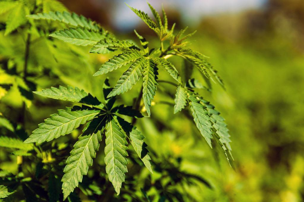 Medical cannabis Mezzanines